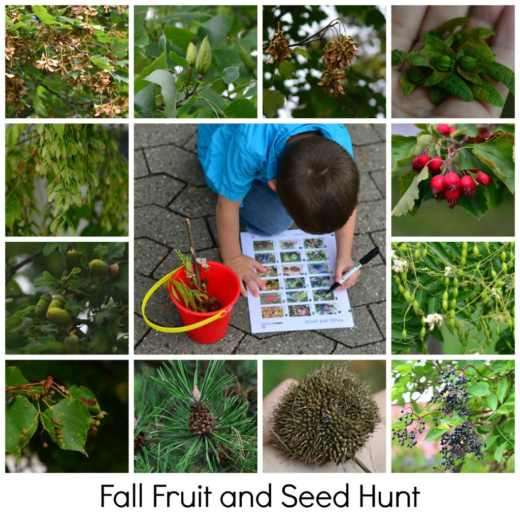 Go on a fruit and seed hunt for fall!