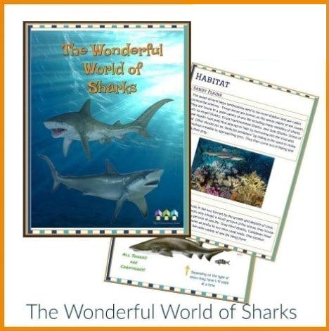 sharks workbook