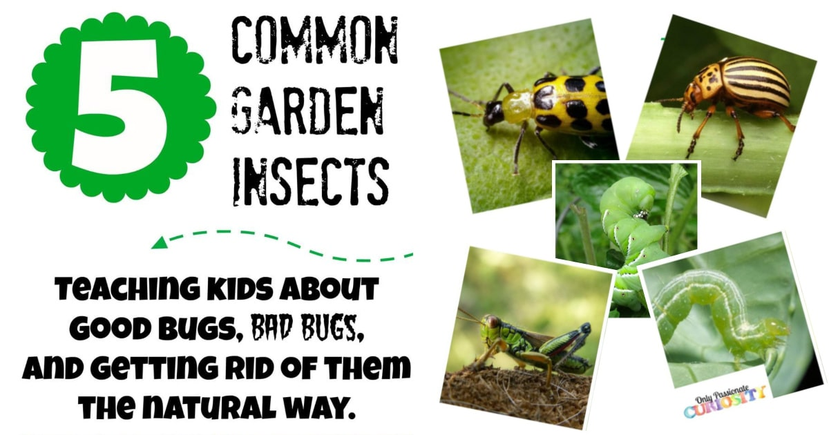 Teaching Children About Garden Bugs And Natural Pesticide Recipes Only Passionate Curiosity