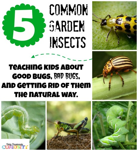 Good Bugs, Bad Bugs, and Getting rid of them the natural way