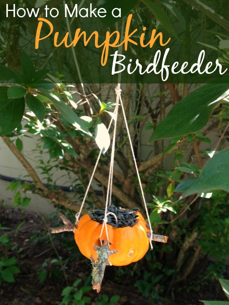 How To Make A Pumpkin Birdfeeder Only