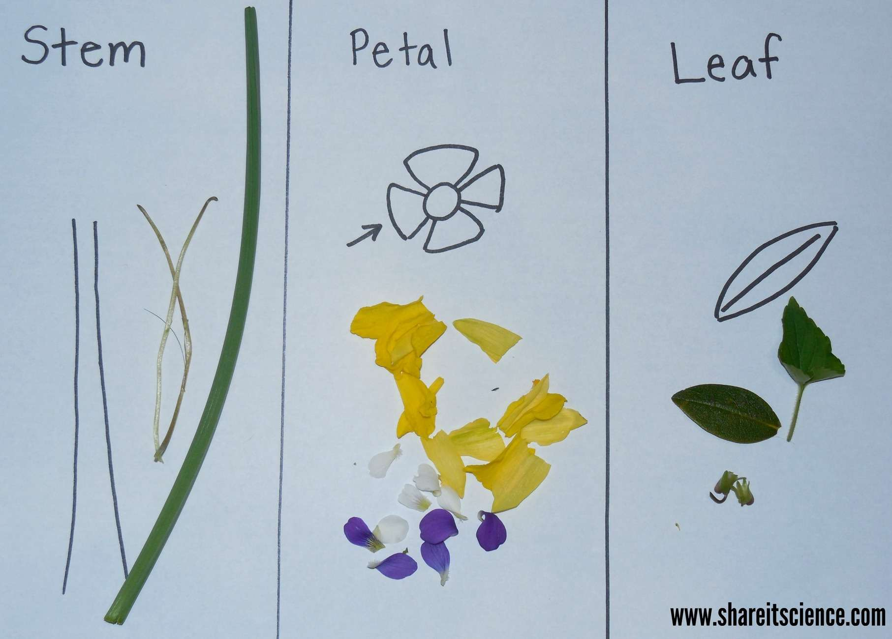 Exploring Flowers! Activities from Preschool to High ...