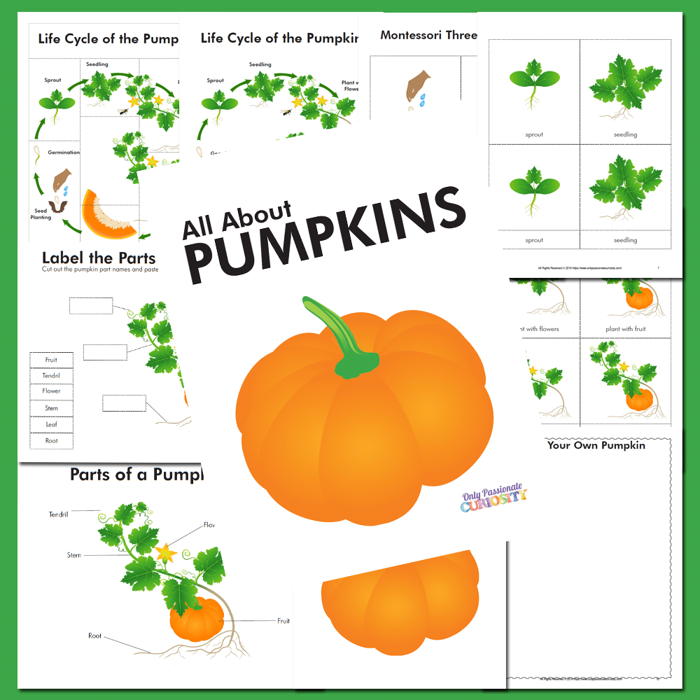 All About Pumpkins Life Cycle Unit Study Only Passionate Curiosity