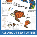 All About Sea Turtles unit study