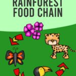 rainforest food chain