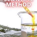 How do you teach your kids about the scientific method? This hands-on friendly printable makes it easier than you might think!