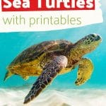 This 13-page All About Sea Turtles unit study features a life cycle puzzle, Montessori 3-part cards, journal pages, and more! Use this resource to celebrate National Turtle Day.