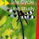 Dragonflies are amazing creatures! Help your child learn all about them with this life cycle unit study! Perfect for upper elementary levels!